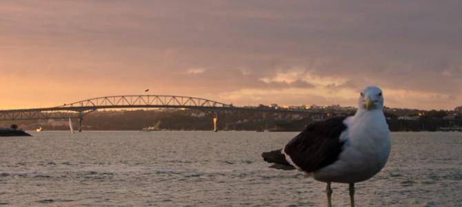 NZ – Auckland – Unsere letzte Metropole vor der Wildnis