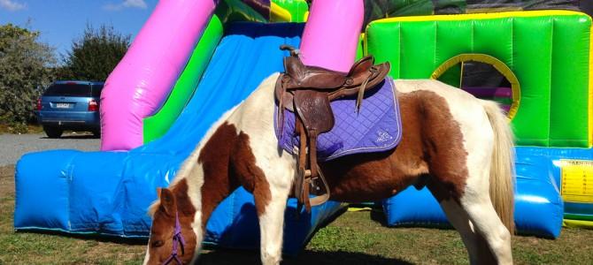 Hamilton – Wwoofen auf einer Ponyfarm